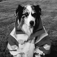 Hund mit Jacke.jpg