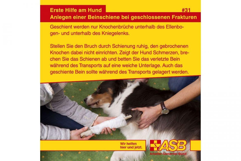 EH T 31