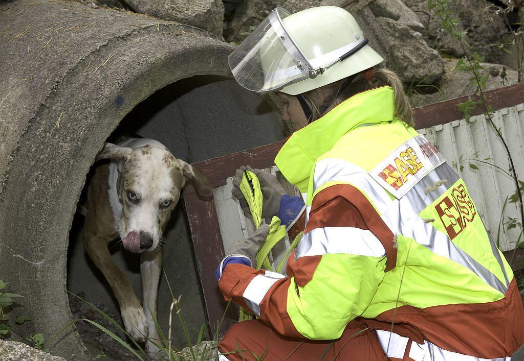 Rettungshunde_080914_45.jpg